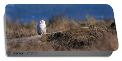 Portable Battery Charger featuring the photograph Snowy Owl On Log by Sharon Talson