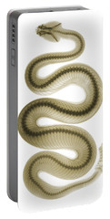 Southern Pacific Rattlesnake, X-ray Portable Battery Charger by Ted Kinsman