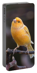 Spanish Timbrado Canary Portable Battery Charger