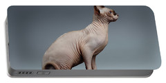 Sphynx Cat Sits And Looking Forward On Black  Portable Battery Charger