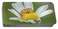 Spider Waits For It's Prey Portable Battery Charger