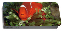 Spinecheek Anemonefish, Indonesia 2 Portable Battery Charger
