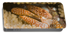 Spotted Guard Crab Portable Battery Charger