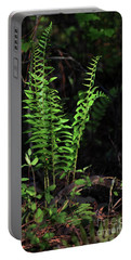 Portable Battery Charger featuring the photograph Spring Ferns by Skip Willits