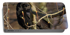 Portable Battery Charger featuring the photograph Springtime Crow Square by Bill Wakeley