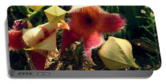 Starfish Of The Desert Portable Battery Charger