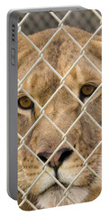 Staring Lioness Portable Battery Charger