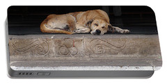 Street Dog Sleeping On Steps Portable Battery Charger