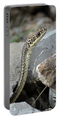 Striped Whipsnake, Masticophis Taeniatus Portable Battery Charger