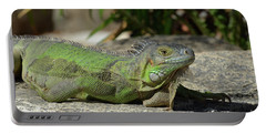 Sunning Green Iguana On A Rock Ledge Portable Battery Charger by DejaVu Designs