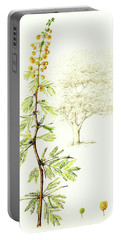 Portable Battery Charger featuring the painting Sweet Thorn Botanical Illustration by Heidi Kriel
