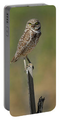 The Burrowing Owl Portable Battery Charger by Steve McKinzie