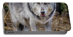 Portable Battery Charger featuring the photograph The Great Gray Wolf by Teri Virbickis