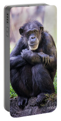 Thoughtful Chimpanzee  Portable Battery Charger by Stephanie Hayes