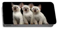 Three Kitty Of Breed Mekong Bobtail On Black Background Portable Battery Charger