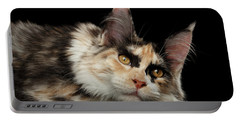 Tired Maine Coon Cat Lie On Black Background Portable Battery Charger