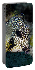 Portable Battery Charger featuring the photograph Trunkfish Portrait by Jean Noren