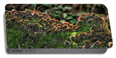 Portable Battery Charger featuring the photograph Turkey Tail Fungus And Moss by Sheila Brown