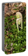 Two Fiddleheads Portable Battery Charger