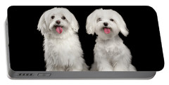 Two Happy White Maltese Dogs Sitting, Looking In Camera Isolated Portable Battery Charger by Sergey Taran