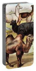 Ungulates Portable Battery Charger