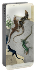 Varieties Of Wall Lizard Portable Battery Charger