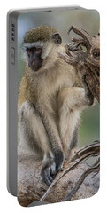 Vervet Monkey Just Watching Portable Battery Charger