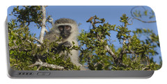 Vervet Monkey Perched In A Treetop Portable Battery Charger