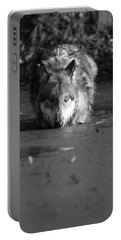 Portable Battery Charger featuring the photograph Water Wolf I by Shari Jardina