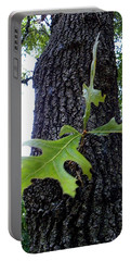Portable Battery Charger featuring the photograph Wekiwa Springs State Park Oakleaf Cluster by Chris Mercer
