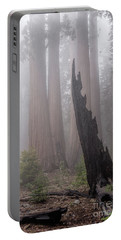 Portable Battery Charger featuring the photograph What Lurks In The Forest by Peggy Hughes