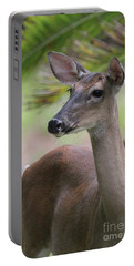 White Tail Doe Closeup Portrait Portable Battery Charger