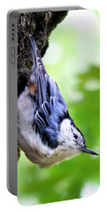 White Breasted Nuthatch Portable Battery Charger