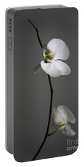 White Phalaenopsis Orchid Portable Battery Charger by Diane Diederich