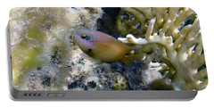 Whiteband Damselfish Portable Battery Charger