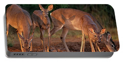 Portable Battery Charger featuring the photograph Whitetail Deer At Waterhole Texas by Dave Welling