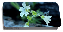 Portable Battery Charger featuring the photograph Wild Chickweed by Ann E Robson