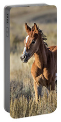 Wild Colt In Sand Wash Basin - Northwest Colorado Portable Battery Charger