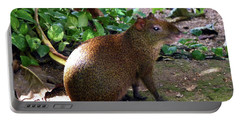 Portable Battery Charger featuring the photograph Wild Rodent  by Francesca Mackenney