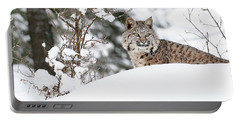 Winter Bobcat Portable Battery Charger by Steve McKinzie