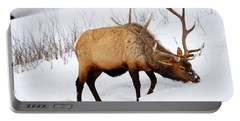 Portable Battery Charger featuring the photograph Winter Bull by Greg Norrell