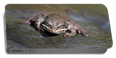 Portable Battery Charger featuring the photograph Wood Frog Close Up by Christina Rollo