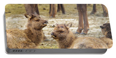 Portable Battery Charger featuring the photograph Yearlings by Jeff Swan