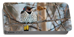 Yellow-shafted Northern Flicker Staying Warm Portable Battery Charger