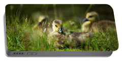 Portable Battery Charger featuring the photograph Young And Adorable by Karol Livote