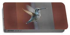 Young Anna's Hummingbird In Flight Portable Battery Charger