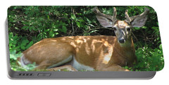 Young Buck Lying In The Shade Portable Battery Charger by Betty Pieper