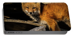 Young Fox In The Wood Portable Battery Charger
