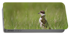 Young Killdeer In Grass Portable Battery Charger