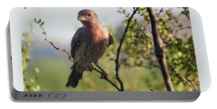 Young Male House Finch Portable Battery Charger